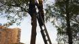 Подростка сняли с дерева в Выборгском районе. Наверх ...