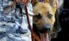 """Умные собаки не нашли взрывчатки в странной сумке на станции метро """"Московская"""""""