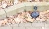 Неизвестный в Выборге похитил из чужой машины мусорный мешок с деньгами