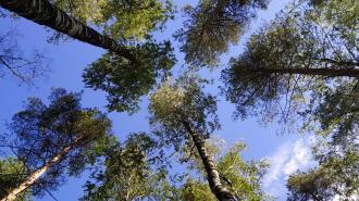 В Петербурге с 26 апреля запрещено посещать лесопарковые зоны и разводить огонь