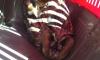 В ЦПКиО им. Кирова в мини-зоопарк подкинули раненую сову