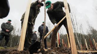 """Ленобласть в мае в рамках акции """"Сад памяти"""" высадит более 90 тысяч деревьев"""