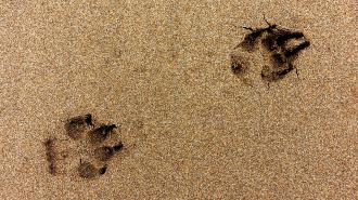 В Петербурге обнаружили тела породистых собак, которых должны были кремировать