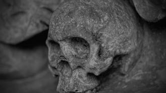 В Ленобласти подполковник полиции нашел скелет человека