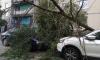 Что делать, если на автомобиль упало дерево: советы юристов