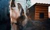 В Ломоносовском районе полицейские задерживали преступника, остреливаясь от собаки