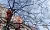 Волонтеры спасли в Ленобласти двух кошек, просидевших на деревьях несколько суток