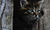 В Кронштадте военный сломал челюсть котенку