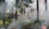 На территории Ленобласти потушили все природные пожары