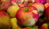 Россельхознадзор не пустил в Петербург 16 тонн польских яблок