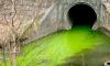 Воды Лиговского канала сменили цвет на едко-зеленый