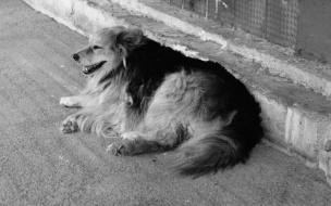 В Выборге ищут дом собаке Лайме, хозяева которой погибли на пожаре