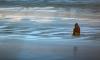 На оторвавшейся в Приморье льдине тюленей приняли за рыбаков