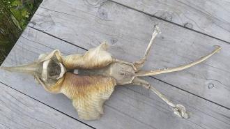 Жиетелей Новой Зеландии испугали останки неизвестного морского существа