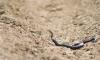 Медики объяснили, как оказывать первую помощь при укусе змеи
