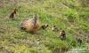 На севере Петербурга птицы начали обзаводиться потомством