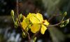 День весны и труда 2018: поздравления с 1 Мая в стихах и прозе