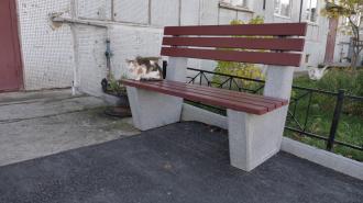 Петербурженке не отдают кота Сёму, который после пропажи оказался в приюте
