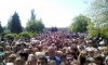 Более 100 студентов из Сирии хотят остаться в Петербурге в статусе беженцев