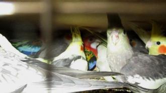 В Петербург привезли 314 попугаев из Краснодара