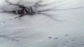 В Приозерске 75-летняя пенсионерка спасла провалившегося под лед мальчика