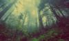 В лесу Соснового Бора заблудился подросток