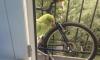 На Лени Голикова в квартиру залетел попугай: петербуржцы пытаются найти владельцев птицы