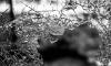Петербуржец по пьяни разбил лобовое стекло реанимобиля