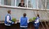 Волонтеры посадили цветы под окнами ветеранов в Ленобласти