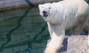 Ленинградский зоопарк показал фото медвежат Услады
