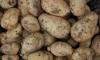 Голодный житель Ивановской области украл 100 кг овощей у пожилого соседа