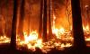 Генпрокуратура выявила факты намеренного поджога лесов в Иркутской области