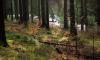 В Агалатово неизвестные на БМВ Х5 похитили юношу и увезли в лес