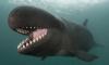 У мексиканского побережья кит протаранил туристический катер
