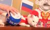 """Эрмитажный кот Ахилл будет """"работать"""" во время Евро-2020"""