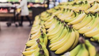 Die Welt: бананы могут оказаться под угрозой исчезновения
