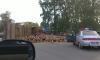 Под Петербургом бревна с лесовоза разлетелись по шоссе, погиб человек
