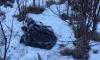 Браконьеры застрелили и разделали беременную лосиху в Ленобласти