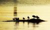 В Приморье в четвертый раз задержали браконьеров из КНДР