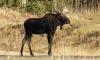 Росприроднадзор напомнил петербуржцам о штрафах за сбитых диких животных