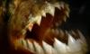 Огромную пиранью поймали в ростовском Соленом озере накануне купального сезона