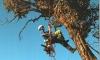 Выбраковка аварийных деревьев в Приморском районе