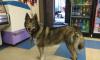 В Петербурге заболела собака, которая каталась на электричках в поисках хозяина