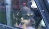 На Введенском канале живодер оставил в запертой машине собак и кошек на голодную смертьв запертой машине
