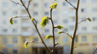 В Ленобласти 10 апреля воздух прогреется до +10 градусов