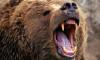 Под Хабаровском медведь разорвал пожилого охотника, который пришел в лес без ружья