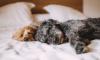 Петербургские ветеринары: домашние животные не болеют коронавирусом