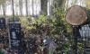 Прокуратура проверит инцидент с упавшими деревьями на Серафимовском кладбище