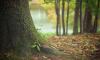 Грибник из Тосненского района нашел в лесу скелет задушенного человека