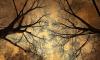 В Парголово местного жителя убила ветка дерева